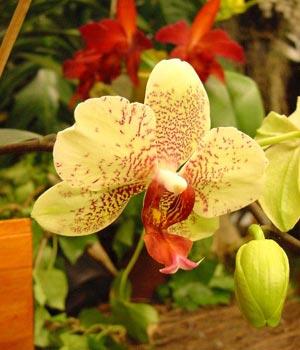 Fotos de flores: Orquídeas