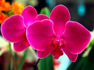 Lenguaje de las orquídeas