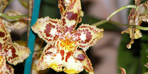 Cuidados de las orquídeas