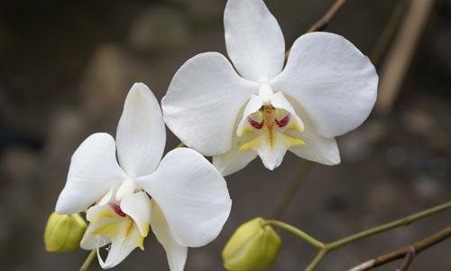 Imágenes de Orquídeas