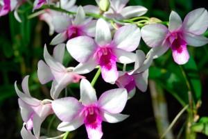 Mantenimiento de las orquídeas